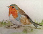 How the finch got her colors folktale on The Story Home.com